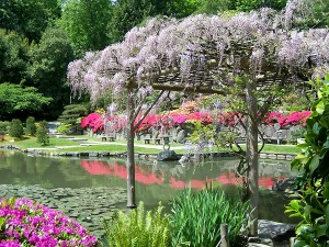 Japanese Garden with Trellised Wisteria